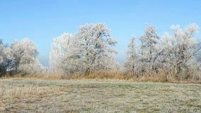 Hoarfrost landscape at Havel river Brandenburg - Germany. stock footage