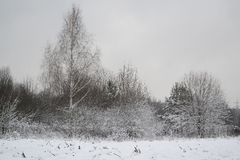 Hoarfrost landscape of russian winter forest with birch royalty free stock photo