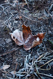 Hoarfrost leave Royalty Free Stock Photo