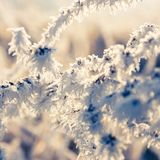 Hoarfrost on leaves, close up Royalty Free Stock Photos