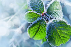 Hoarfrost on the leaves Royalty Free Stock Photos