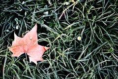 Hoarfrost liść na zielonej trawie w wiośnie zdjęcia stock