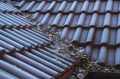 Hoarfrost na dachu Obraz Royalty Free