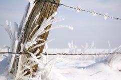 Hoarfrost na grama Fotos de Stock