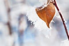 Hoarfrost na liściach w zima lesie Fotografia Stock