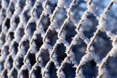 Hoarfrost net all over Royalty Free Stock Photography