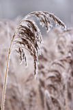 Hoarfrost oder weicher Raureif auf Anlagen an einem Wintertag stockfotografie