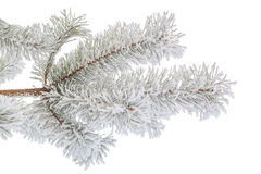 Hoarfrost. Stock Images