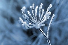 Hoarfrost on the plant close up. Royalty Free Stock Photography