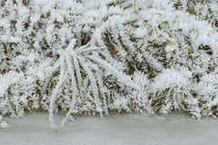 Hoarfrost rime ice on twigs of grass along frozen stream Stock Photography