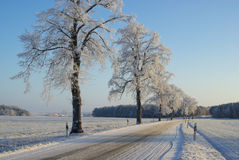 Hoarfrost road Royalty Free Stock Photo