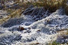 Hoarfrost at soil Stock Photography
