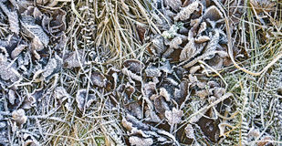 Hoarfrost at soil Stock Image
