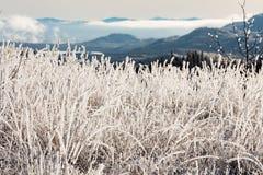 Hoarfrost som täcker vegetation på vinterfrostdag royaltyfria bilder