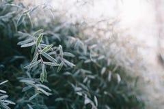 Hoarfrost su erba fotografia stock
