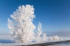 Hoarfrost sugli alberi. fotografia stock libera da diritti