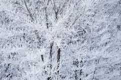 Hoarfrost sugli alberi fotografia stock