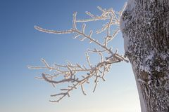 Hoarfrost on a tree branch Royalty Free Stock Photography