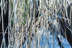 Hoarfrost on tree branch in close up. Royalty Free Stock Photos