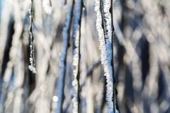 Hoarfrost on tree branch in close up. Royalty Free Stock Photo