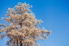 Hoarfrost on a tree branche Stock Photography