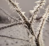 Hoarfrost on tree branches stock image