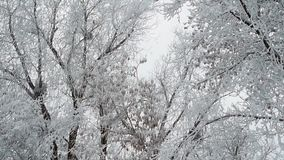 Hoarfrost on tree branches. Nature background stock video footage