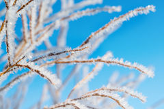 Hoarfrost on the tree, winter background, small depth of field Royalty Free Stock Photo