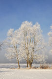 Hoarfrost tree Stock Photos