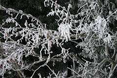 Hoarfrost on trees. Tree branches with hoar frost Royalty Free Stock Photos
