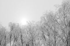 Hoarfrost on the trees Royalty Free Stock Images