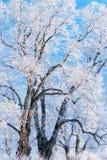 Hoarfrost on the trees Stock Photos