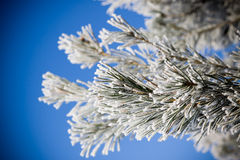 Hoarfrost on trees Stock Photo