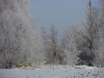 Hoarfrost is on trees Royalty Free Stock Photos