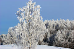 White frost over forest. Royalty Free Stock Photography