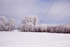 Hoarfrost on the trees and high voltage line. stock images