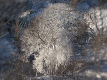 Hoarfrost on trees in park. Royalty Free Stock Photos