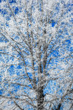 Hoarfrost on trees Royalty Free Stock Photos