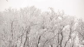 Hoarfrost on a Trees. White forest covered with frost stock video