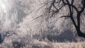 Hoarfrost on a Trees. White forest covered with frost stock video footage
