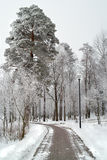 Hoarfrost on trees in winter. Royalty Free Stock Photography
