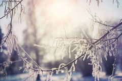 Hoarfrost on the trees in winter forest Stock Photography