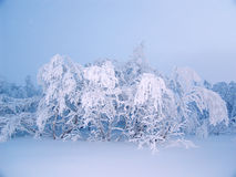 Hoarfrost und Schnee 01 Stockfotografie