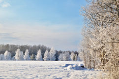 Hoarfrost view Royalty Free Stock Image