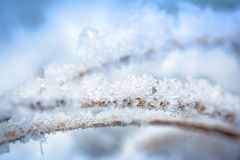 Hoarfrost on the winter bushes Royalty Free Stock Photo