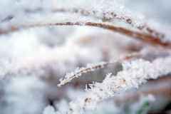 Hoarfrost on the winter bushes Royalty Free Stock Photos