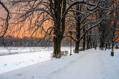 Hoarfrost on a winter morning. Bank of the river with trees covered with rime on a winter morning Royalty Free Stock Photos
