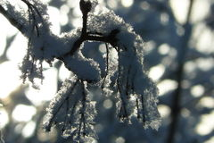 In hoarfrost5 Stock Photography