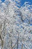 In hoarfrost6 Royalty Free Stock Image