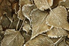 hoarfrost zakrywający liść Zdjęcia Royalty Free